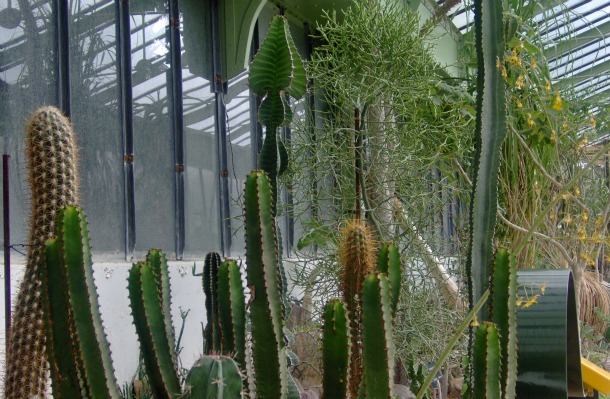 Cacti Les Serres d'Auteuil - the Greenhouses in Paris