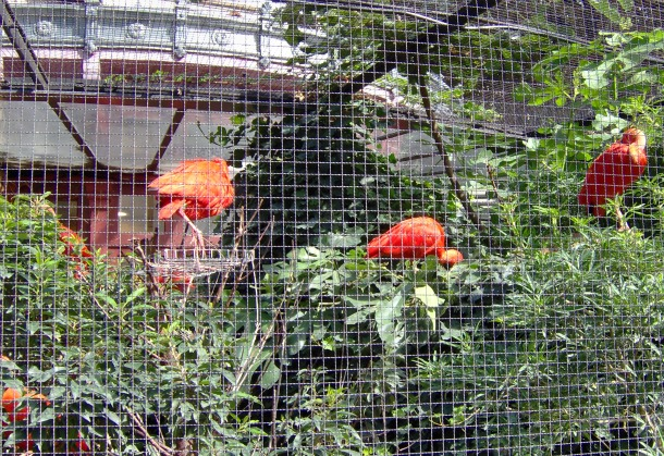 Birds at Paris Zoo