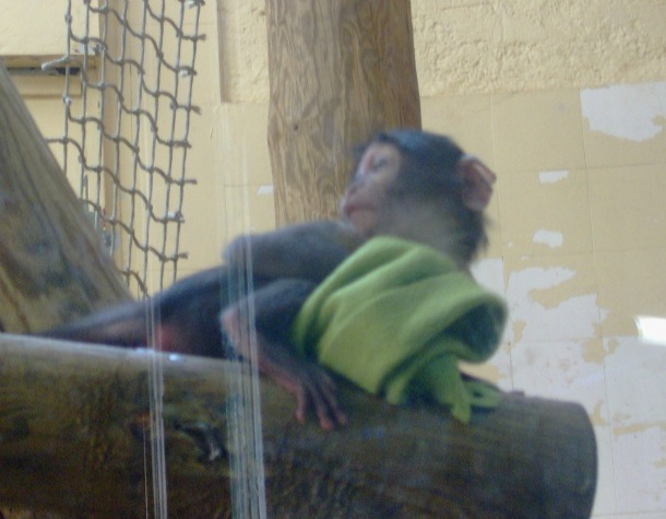 Funny Monkey at Paris Zoo